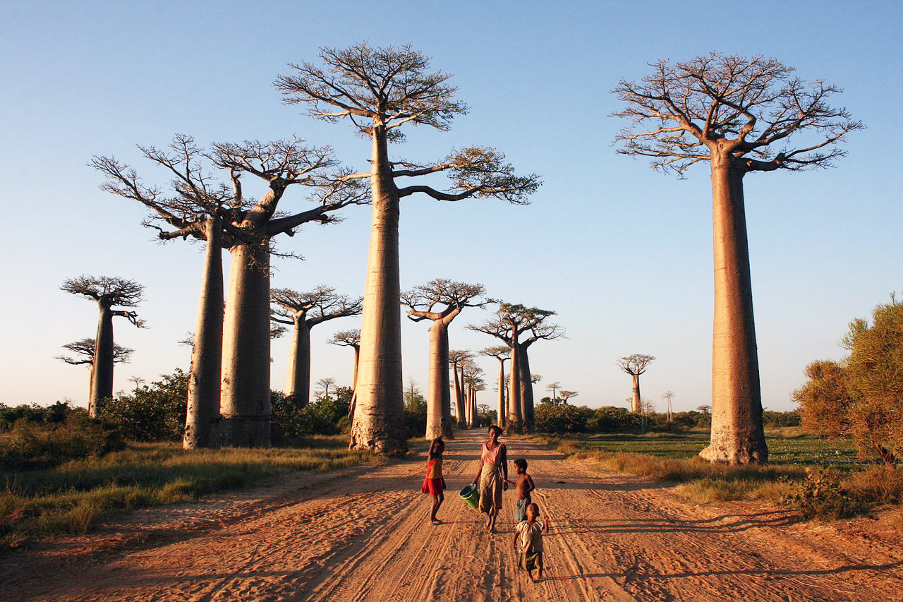 What are the official languages of Madagascar?